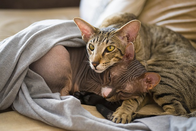 male-pagan-cat-names