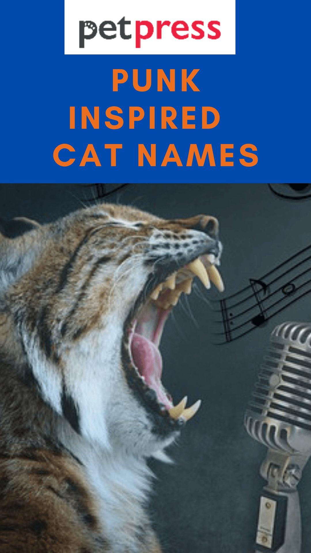 punk-cat-names