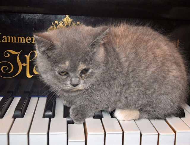 punk-cat-names-from-musicians