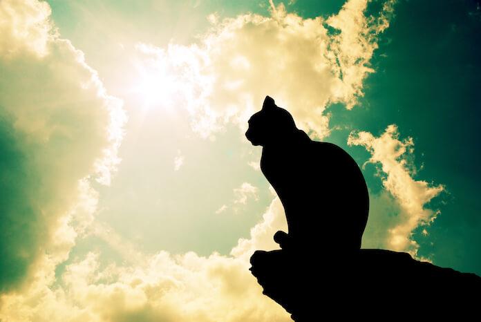 best sun cat names