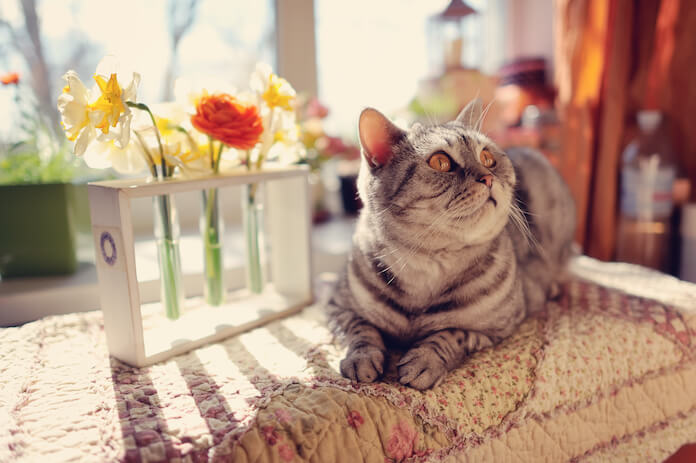 Female Sun Cat Names with meanings
