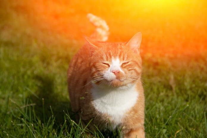 Unisex Sun Cat Names