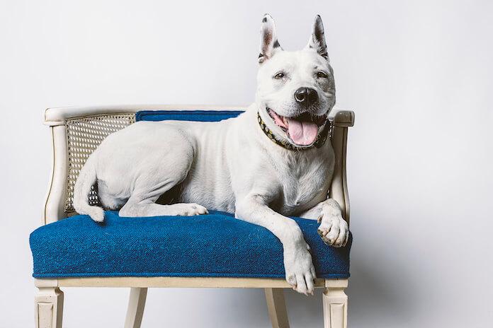 Best Blue Dog Names
