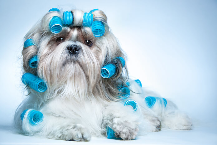 Dog Names With Meanings For A Blue Dog