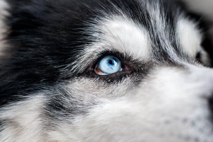 Male Blue dog names