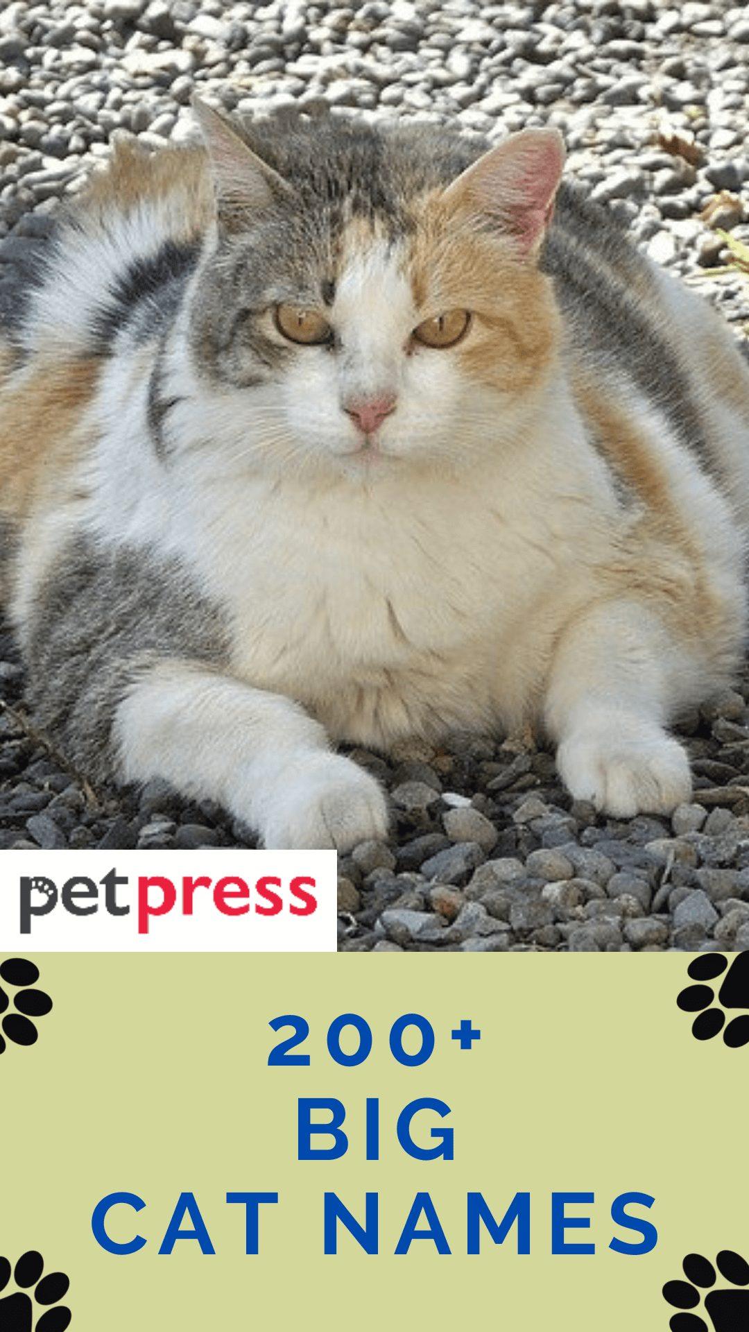 big-cat-names