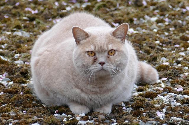 female-big-cat-names