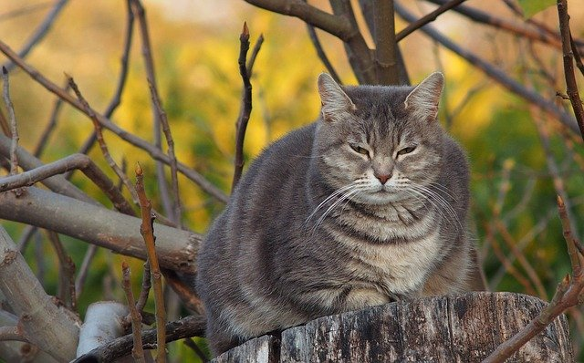 famous-big-cat-names