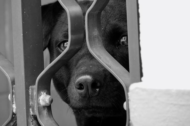 smuggling-dog