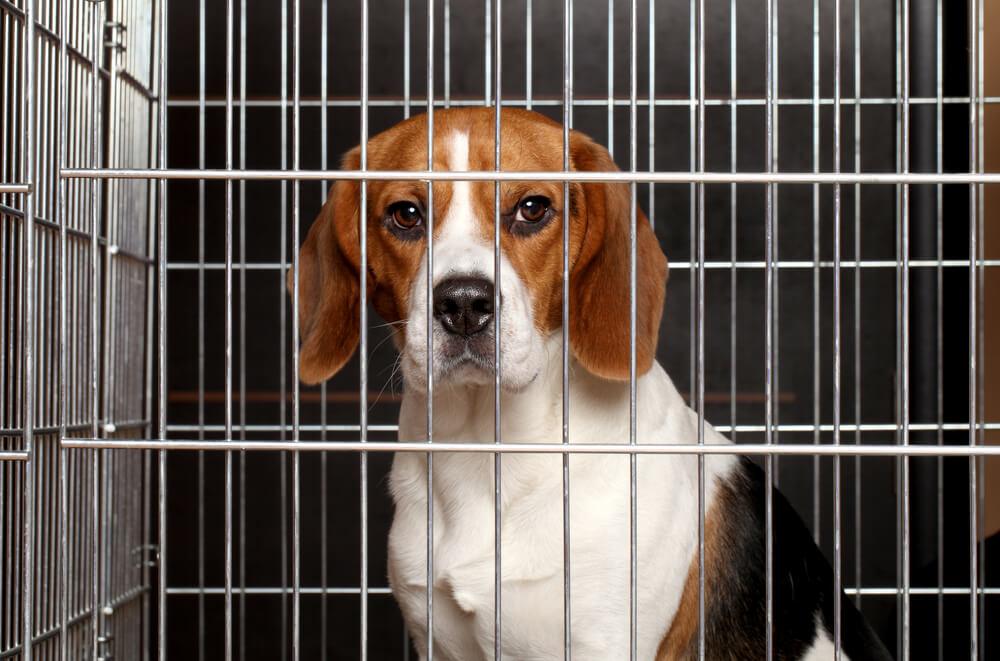 dog-smuggling