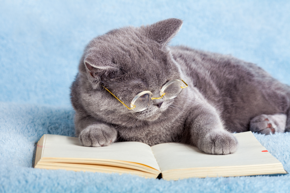 science-cat-names