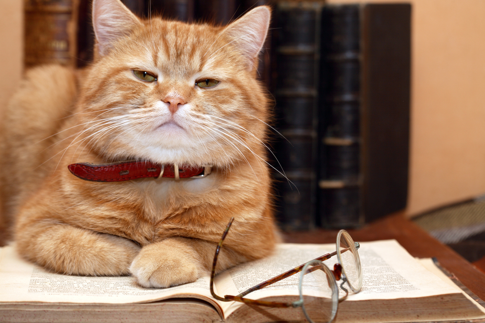 Scientist Cat