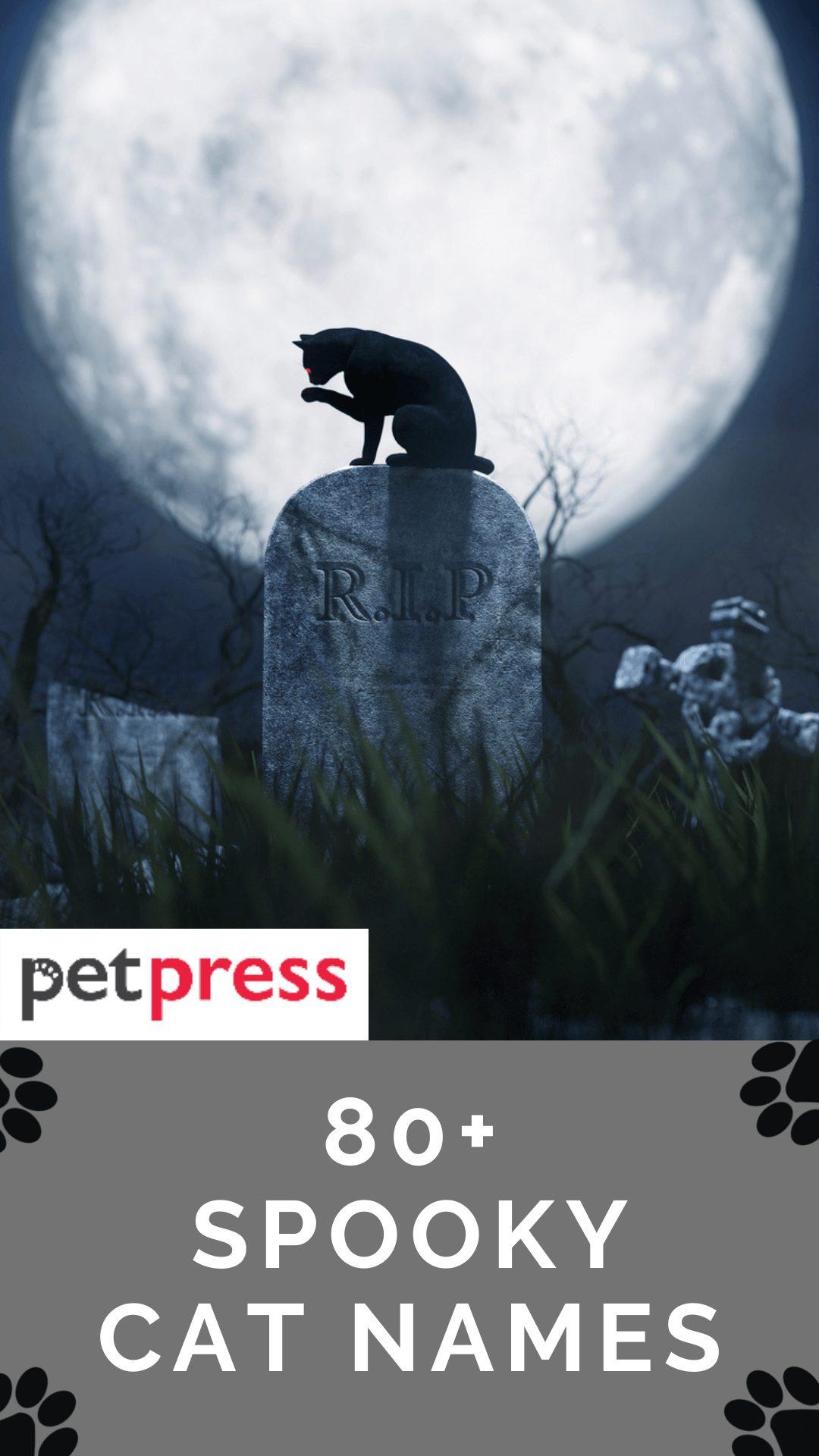 spooky-cat-names