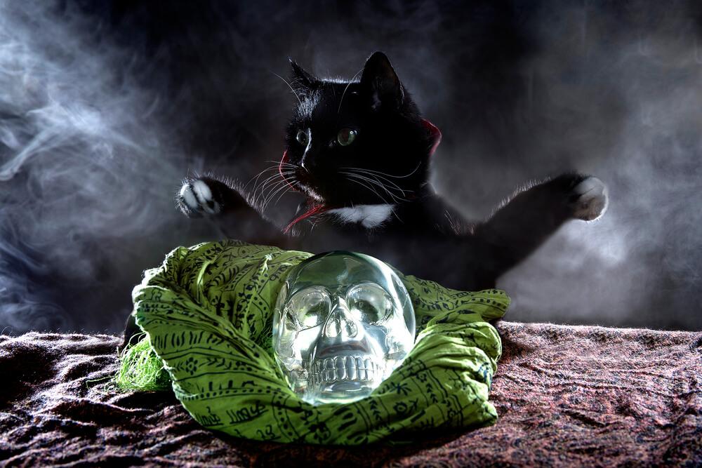 male-spooky-cat-names