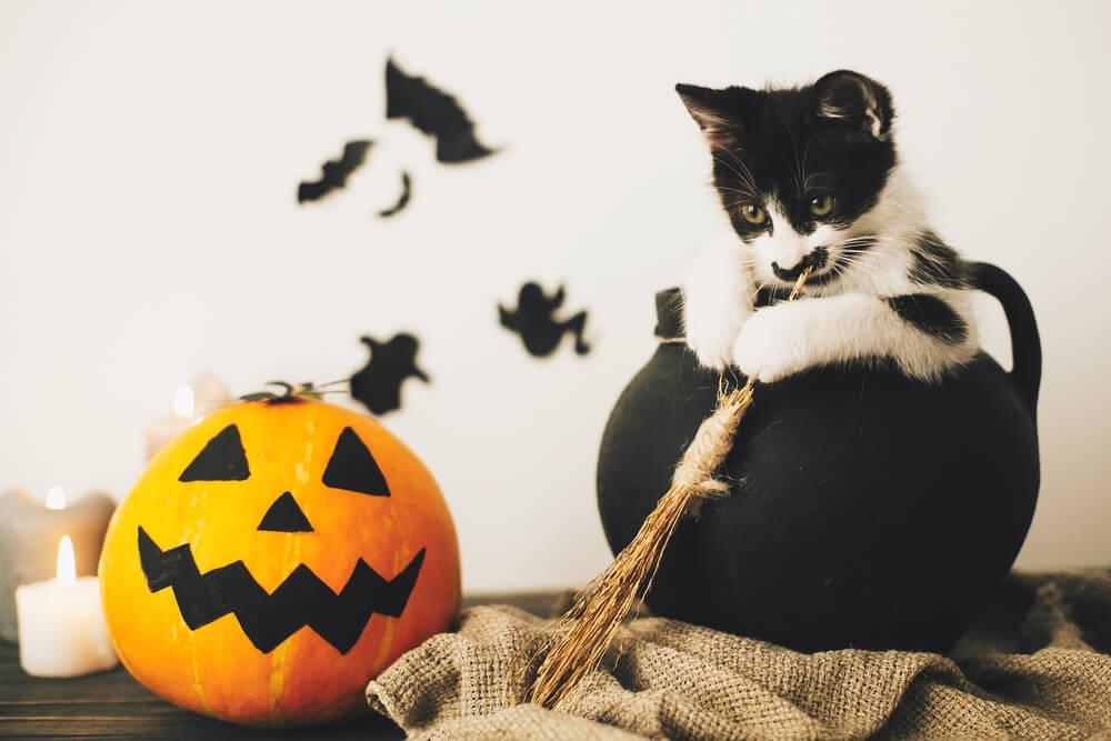 female-spooky-cat-names