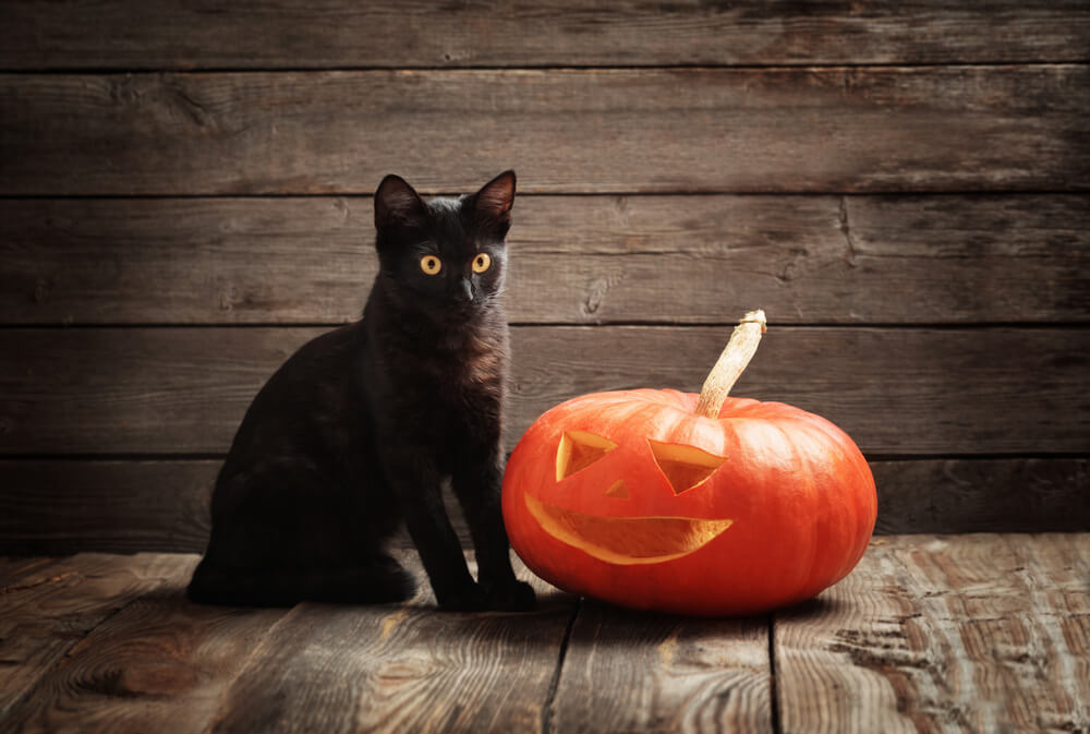 spooky-gothic-cat-names