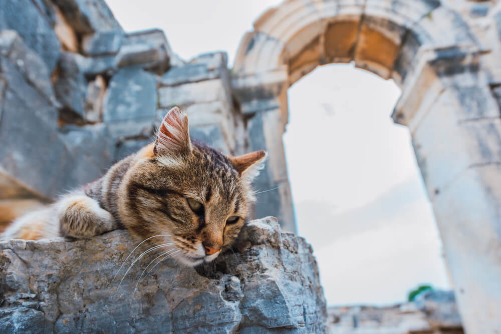 male-ancient-cat-names