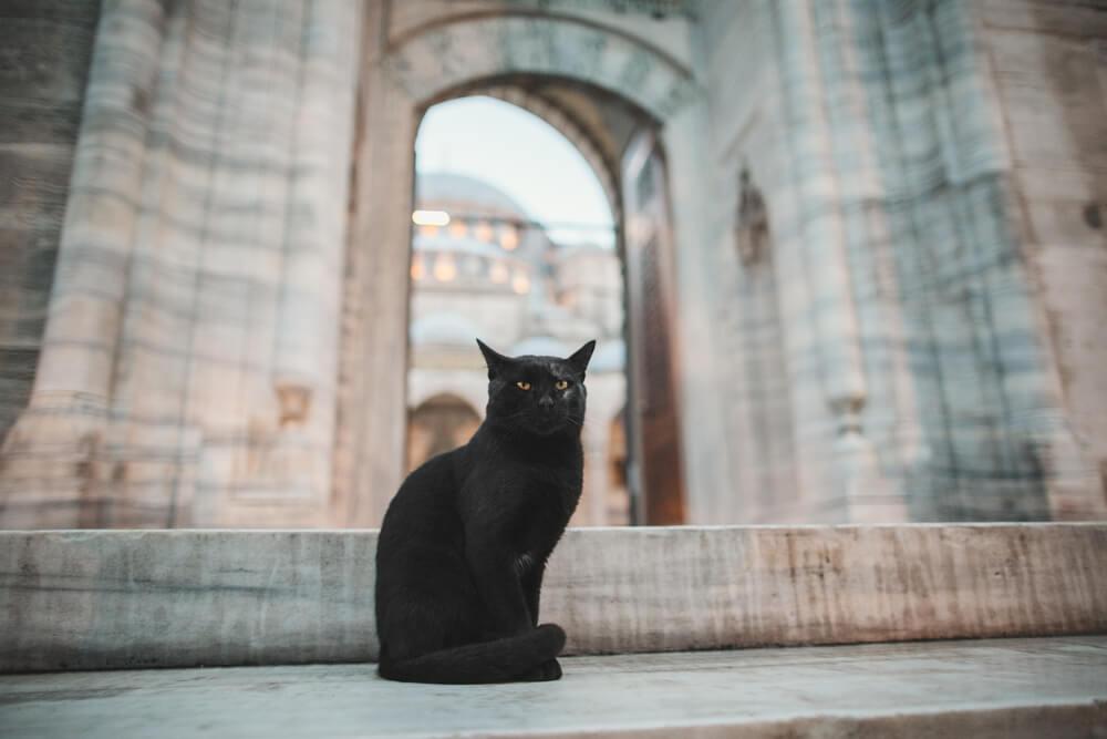 latin-ancient-cat-names