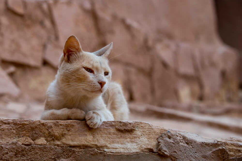 egyptian-ancient-cat-names