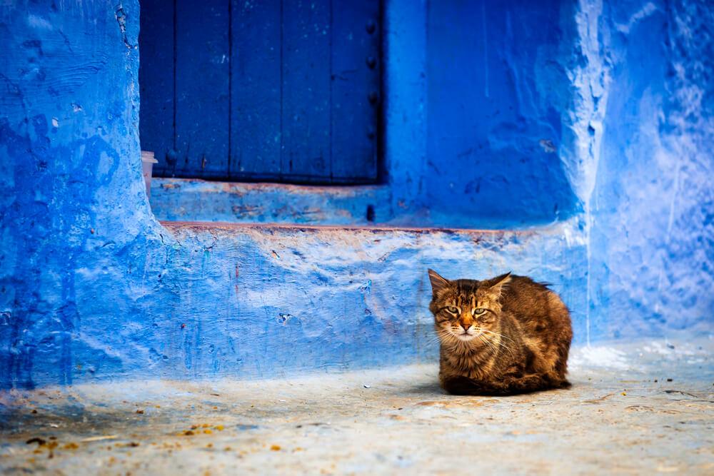norse-ancient-cat-names