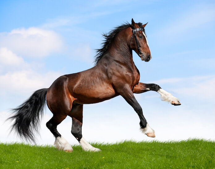 100+ badass horse names for naming a horse