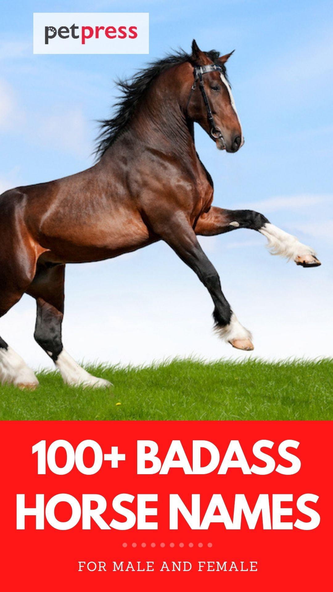 top 100+ badass horse names