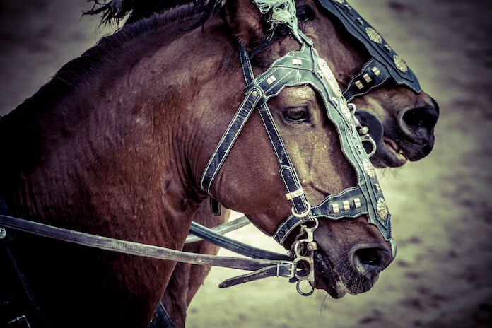 90+ Famous Roman Horse Names - Roman Names With Meanings