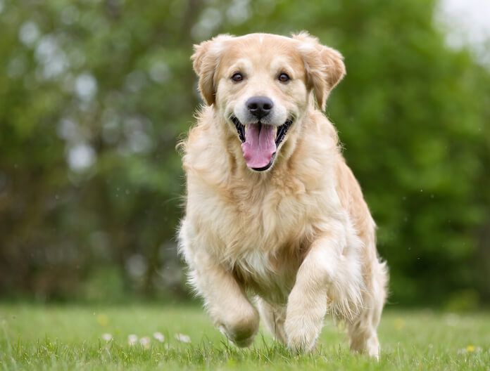 Male Dog Names Without The Letter 'a'