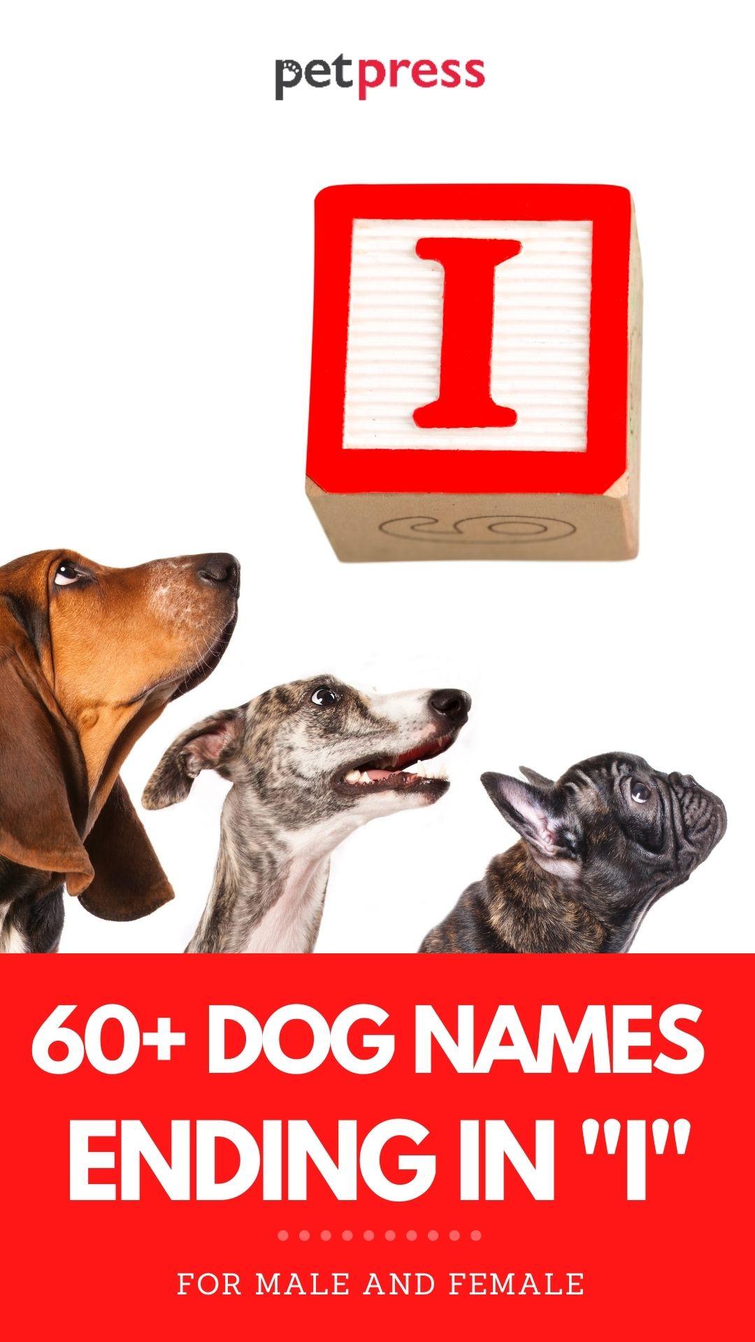 dog names ending in i