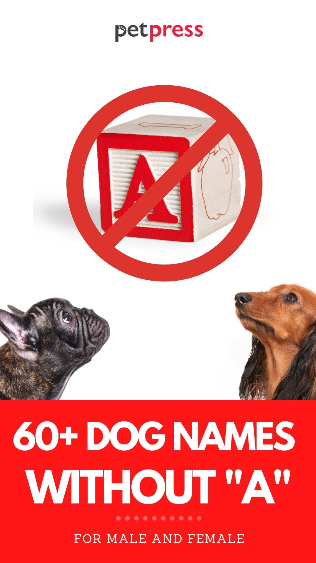 60+ Dog Names Without an A