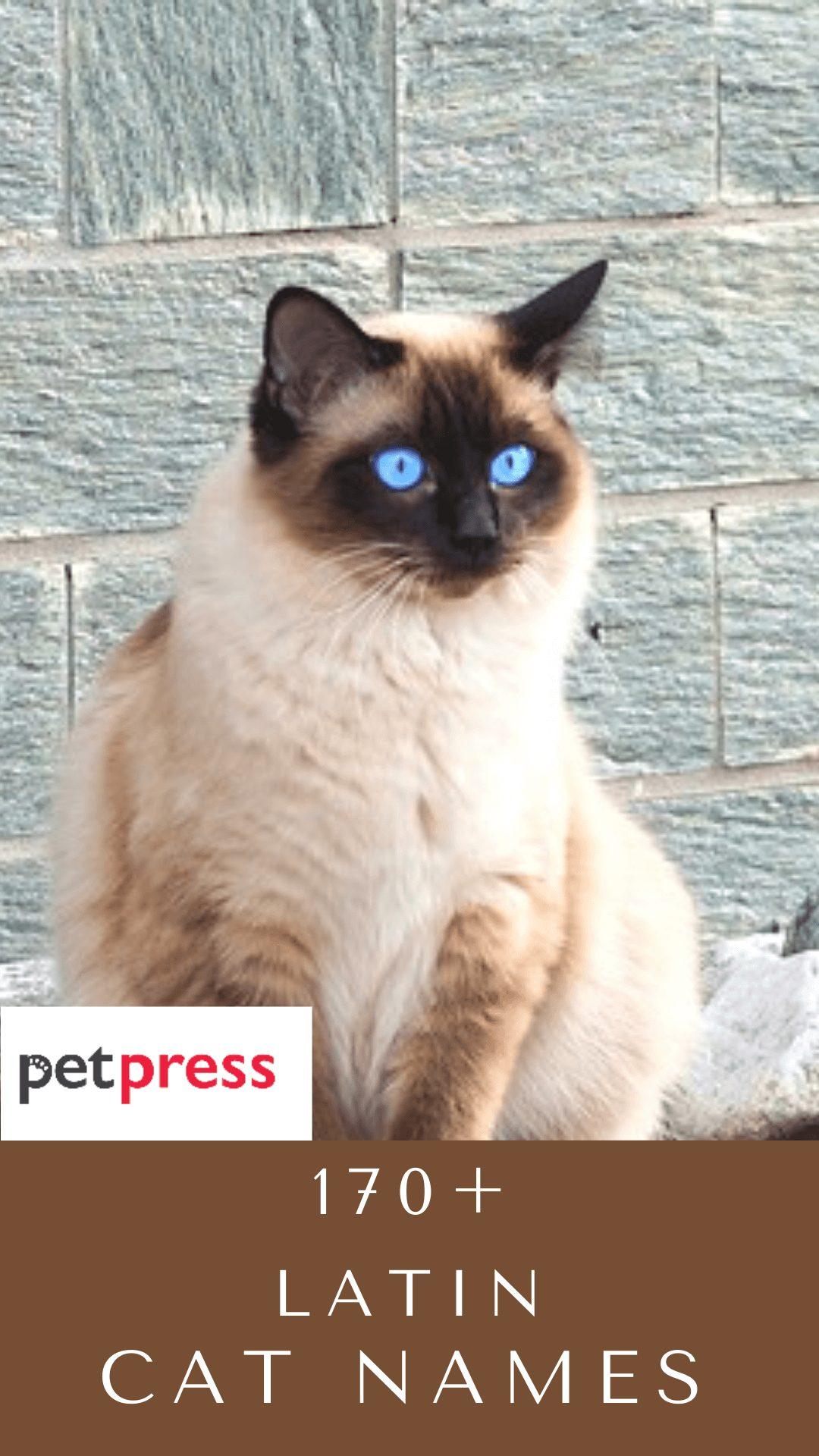 latin-cat-names