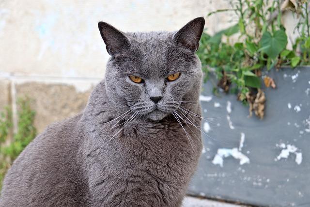 male-latin-cat-names