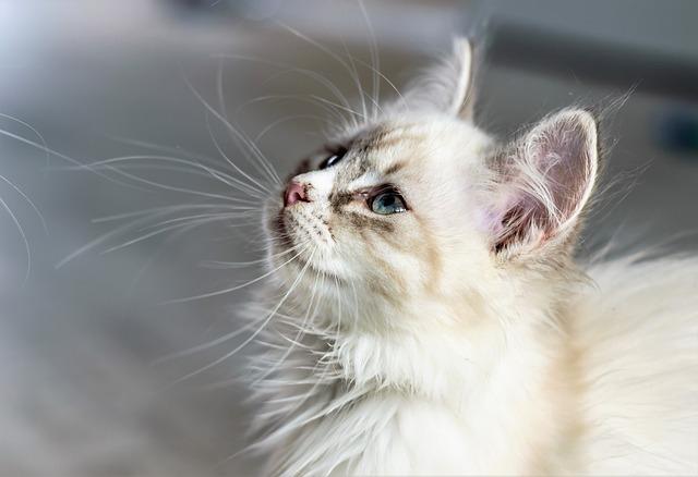 female-latin-cat-names