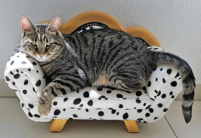 cool-latin-cat-names