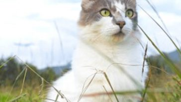 mountain-cat-names