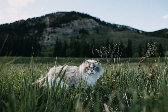 male-mountain-cat-names