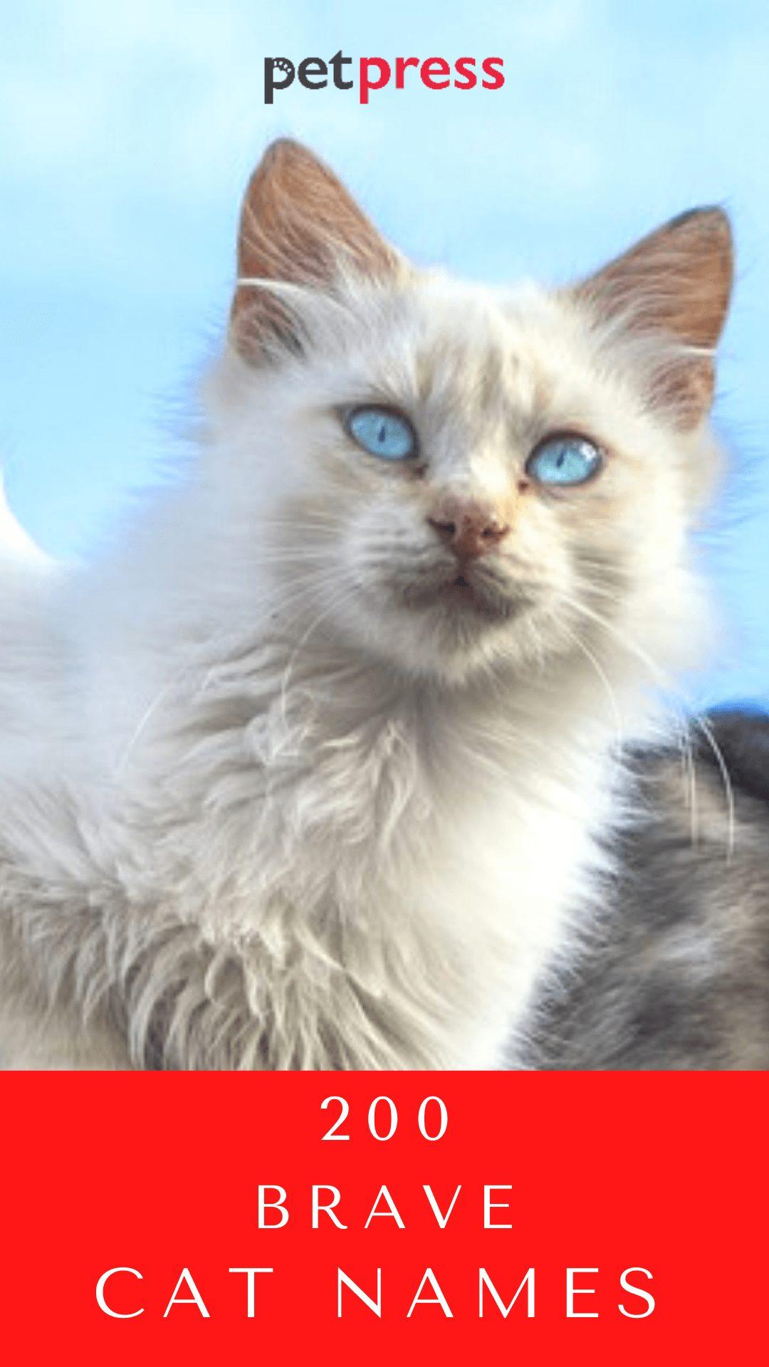 brave-cat-names