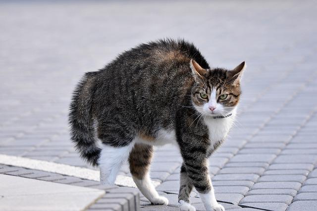 brave-male-cat-names