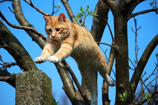 brave-female-cat-names