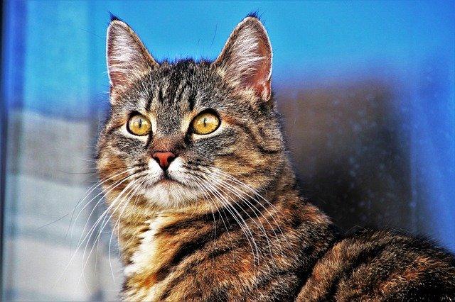 brave-unisex-cat-names