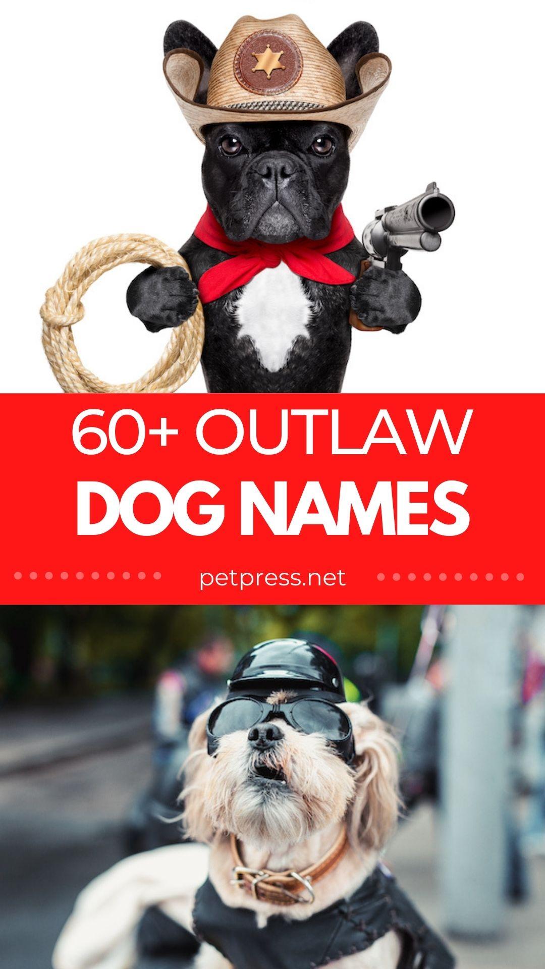 60+ outlaw dog names