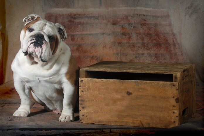 Best Outlaw Dog Names