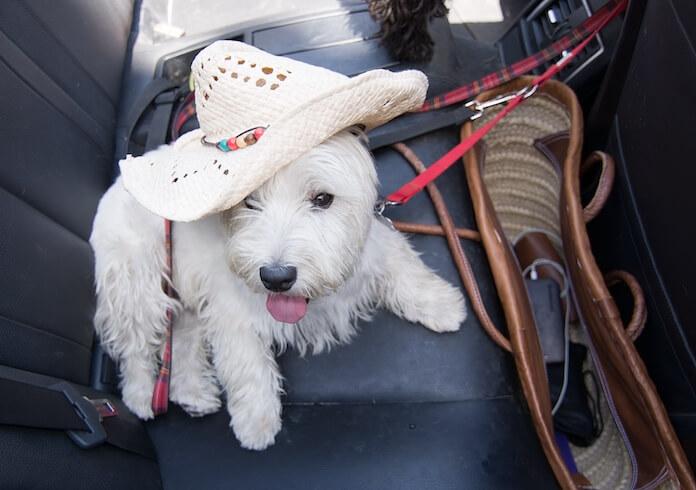 Outlaw Girl Dog Names