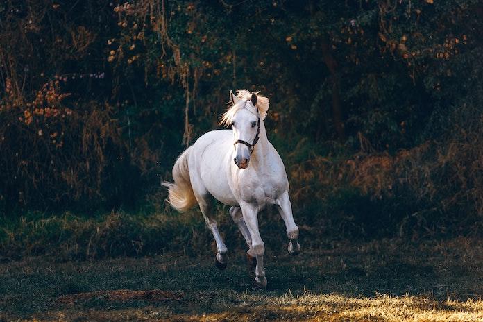 female urdu horse names