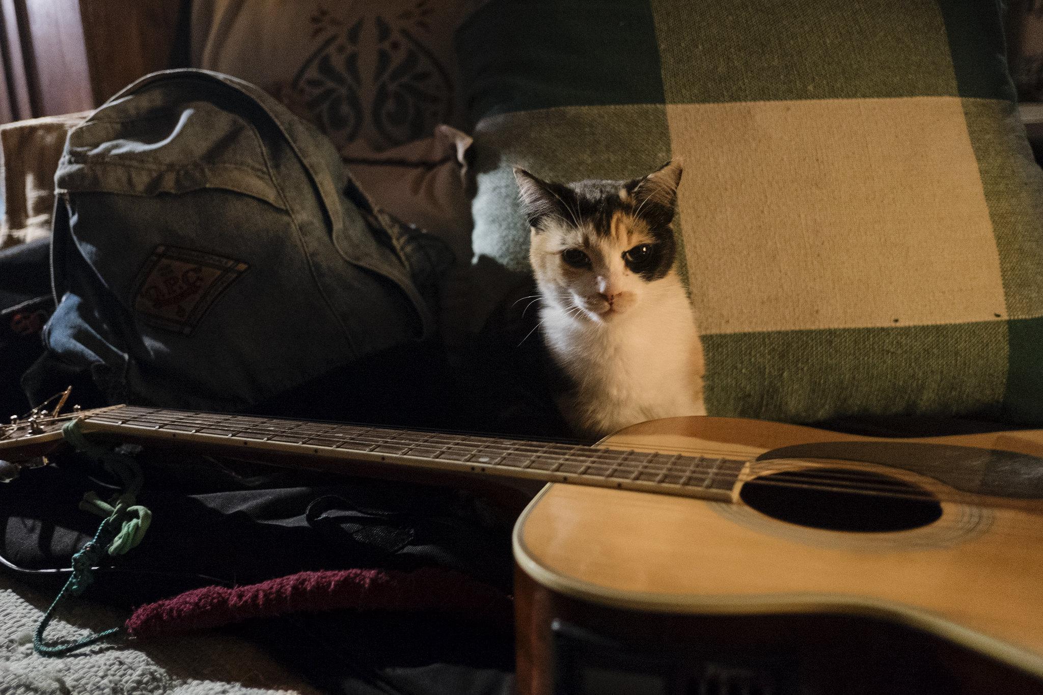 female-jazz-cat-names
