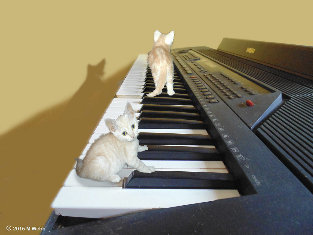 unisex-jazz-cat-names