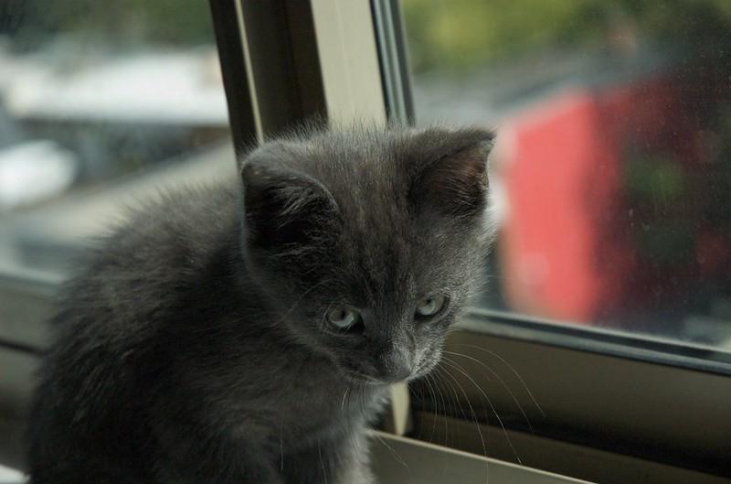 female-emo-cat-names