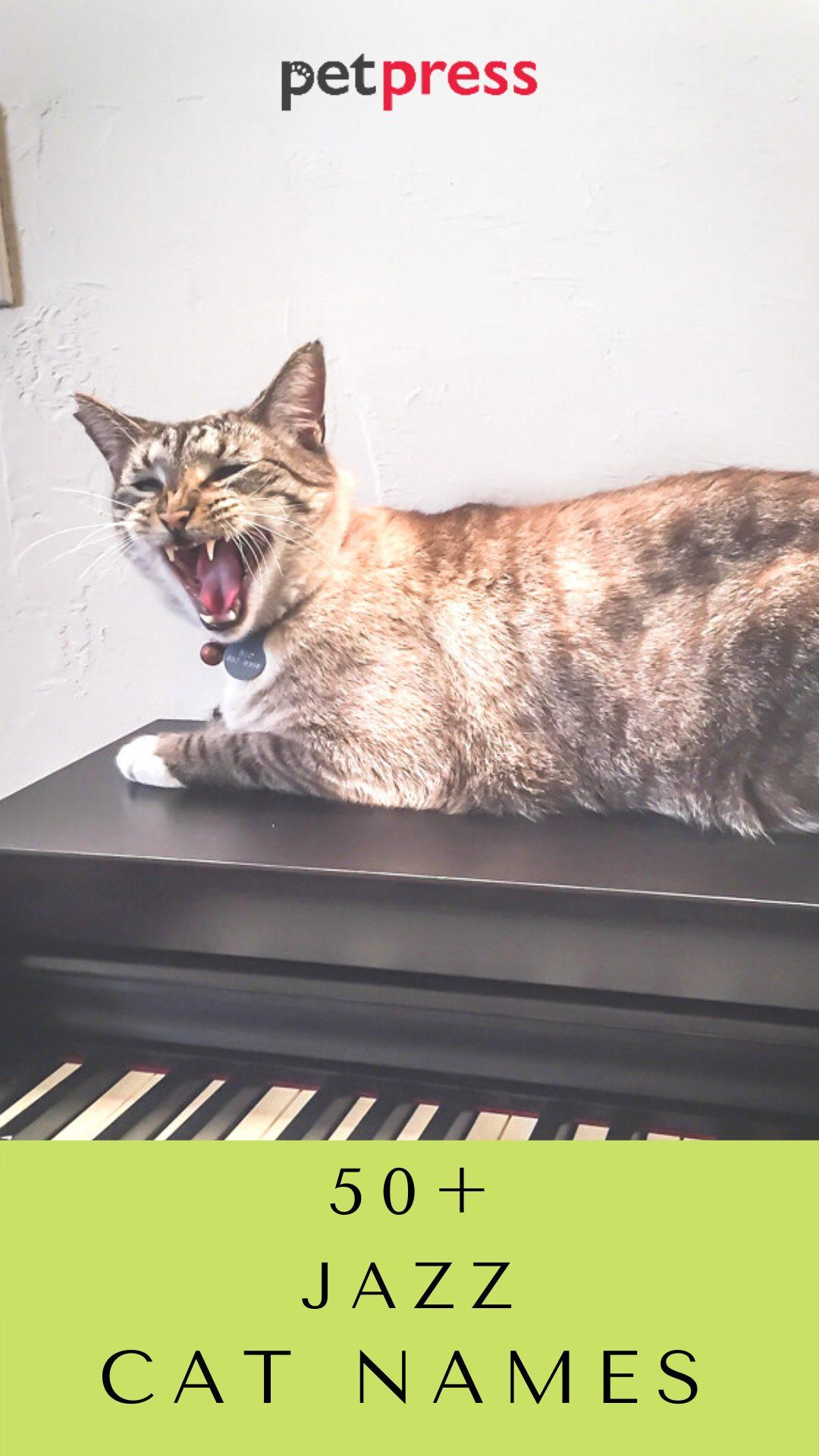 jazz-cat-names