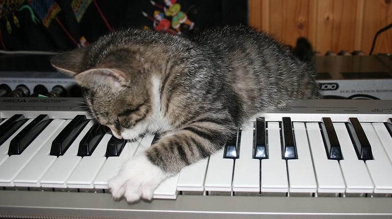 rap-hip-hop-cat