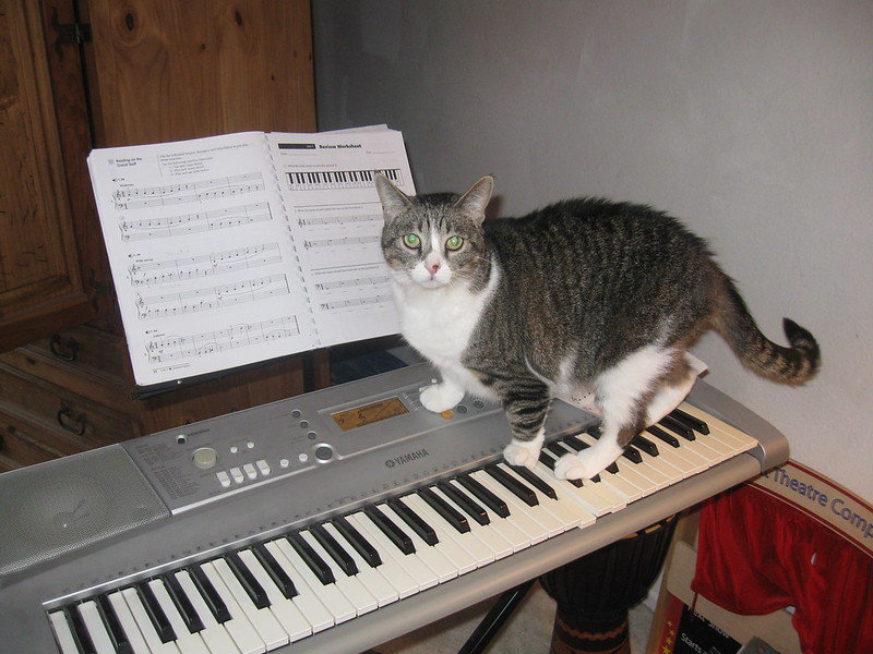 country-cat
